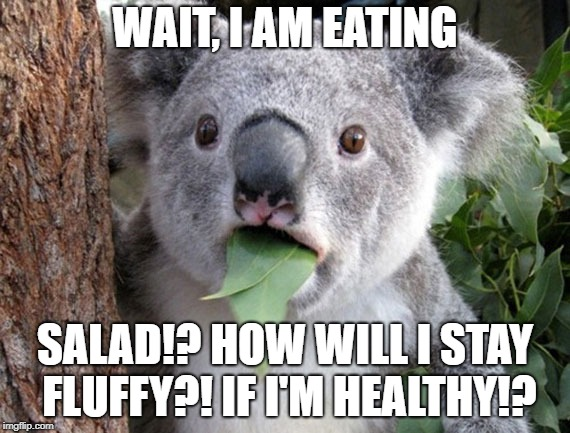 Koala trying to stay fat- Oops I mean fit! | WAIT, I AM EATING SALAD!? HOW WILL I STAY FLUFFY?! IF I'M HEALTHY!? | image tagged in fatty,cute | made w/ Imgflip meme maker