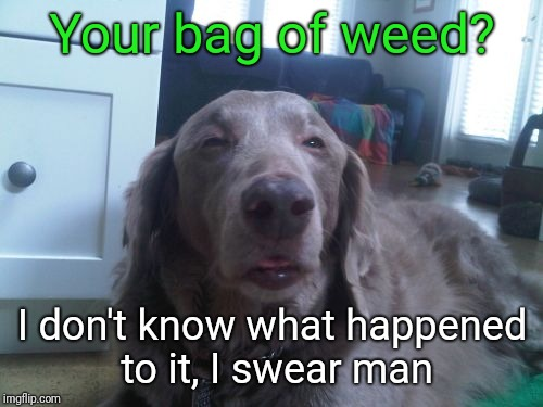 Where's my weed??? | Your bag of weed? I don't know what happened to it, I swear man | image tagged in stoned,high dog,justjeff,weed | made w/ Imgflip meme maker
