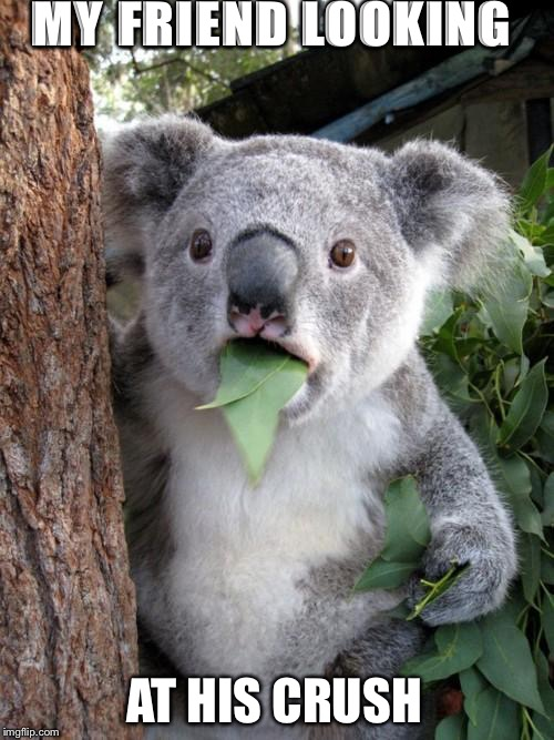 Surprised Koala Meme | MY FRIEND LOOKING AT HIS CRUSH | image tagged in memes,surprised koala | made w/ Imgflip meme maker