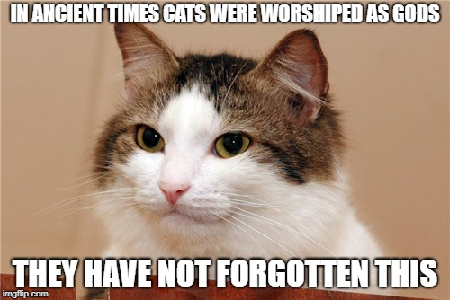 Pratchett was right! | IN ANCIENT TIMES CATS WERE WORSHIPED AS GODS THEY HAVE NOT FORGOTTEN THIS | image tagged in cat,gods,god,memes,terry pratchett,discworld | made w/ Imgflip meme maker