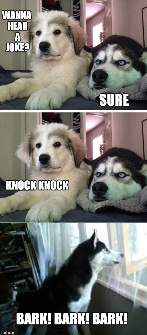 Bad pun dogs | WANNA HEAR A JOKE? SURE KNOCK KNOCK BARK! BARK! BARK! | image tagged in bad pun dogs | made w/ Imgflip meme maker