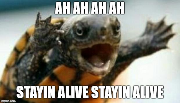 Turtle Say What? | AH AH AH AH STAYIN ALIVE STAYIN ALIVE | image tagged in turtle say what | made w/ Imgflip meme maker