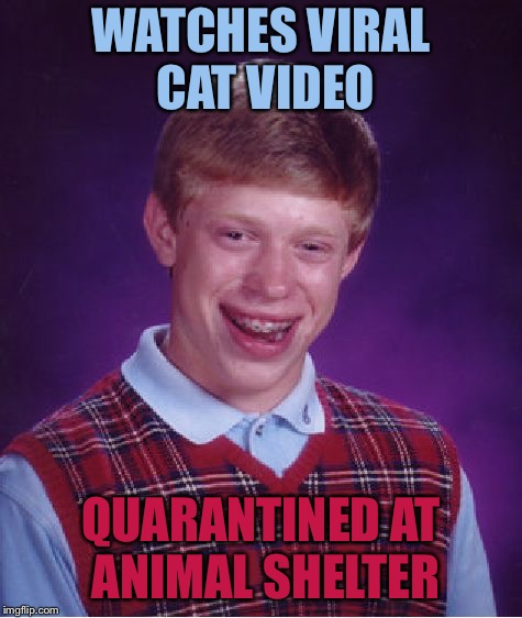 Bad Luck Brian Meme | WATCHES VIRAL CAT VIDEO QUARANTINED AT ANIMAL SHELTER | image tagged in memes,bad luck brian | made w/ Imgflip meme maker