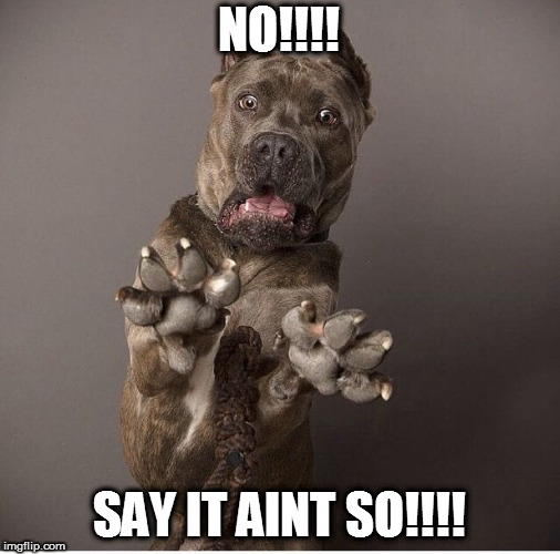 sarcastic dog | NO!!!! SAY IT AINT SO!!!! | image tagged in sarcastic dog | made w/ Imgflip meme maker