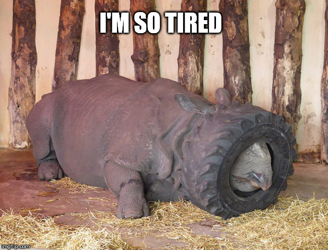 Rhino  | I'M SO TIRED | image tagged in so tired,rhino,meme | made w/ Imgflip meme maker