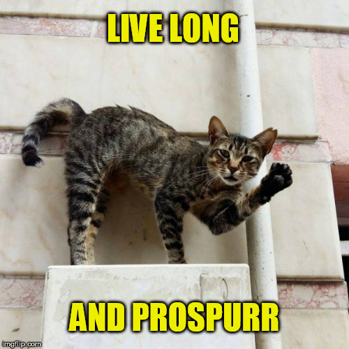 Vulcan cat | LIVE LONG AND PROSPURR | image tagged in cat,live long and prosper,spock,vulcan,meme | made w/ Imgflip meme maker