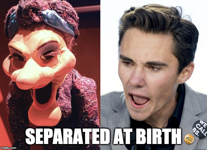 The Puppet Madame/David Hogg Separated At Birth | SEPARATED AT BIRTH | image tagged in david hogg,separated at birth | made w/ Imgflip meme maker