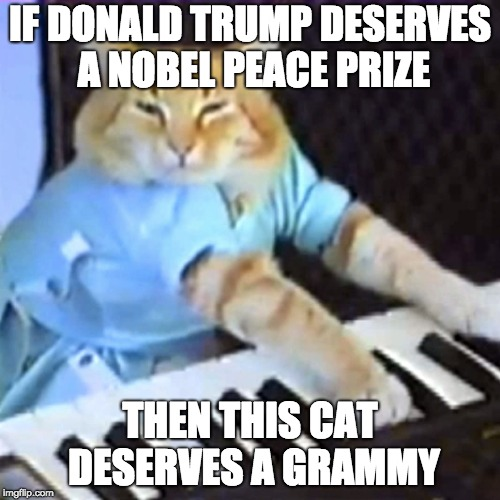 IF DONALD TRUMP DESERVES A NOBEL PEACE PRIZE THEN THIS CAT DESERVES A GRAMMY | image tagged in keyboard cat | made w/ Imgflip meme maker
