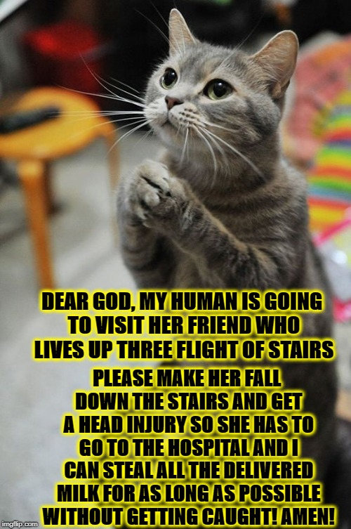 DEAR GOD, MY HUMAN IS GOING TO VISIT HER FRIEND WHO LIVES UP THREE FLIGHT OF STAIRS PLEASE MAKE HER FALL DOWN THE STAIRS AND GET A HEAD INJU | image tagged in the feline prayer | made w/ Imgflip meme maker