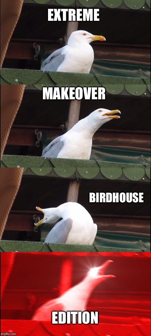 Inhaling Seagull Meme | EXTREME MAKEOVER BIRDHOUSE EDITION | image tagged in memes,inhaling seagull | made w/ Imgflip meme maker