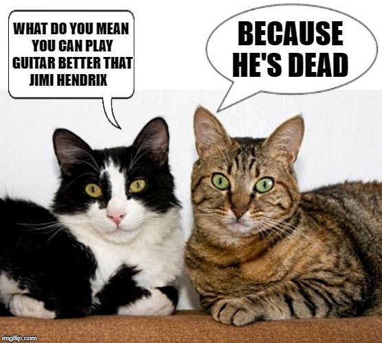 what do you mean you can play guitar better that jimi hendrix | WHAT DO YOU MEAN YOU CAN PLAY GUITAR BETTER THAT JIMI HENDRIX BECAUSE HE'S DEAD | image tagged in cats,jimi hendrix,dead,guitar,funny animals | made w/ Imgflip meme maker