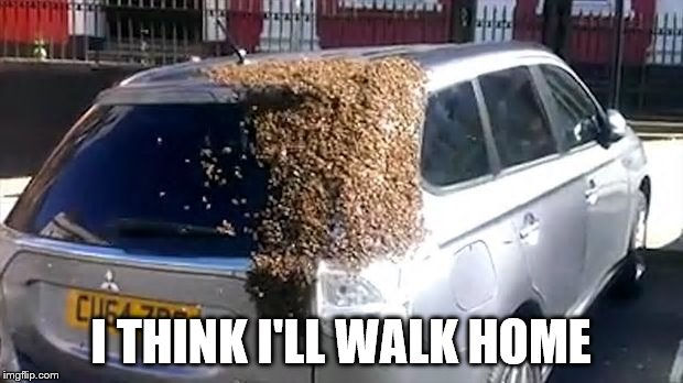 buzz buzz... | I THINK I'LL WALK HOME | image tagged in memes,cars,bees | made w/ Imgflip meme maker