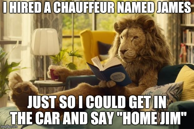 "Lion relaxing | I HIRED A CHAUFFEUR NAMED JAMES JUST SO I COULD GET IN THE CAR AND SAY ""HOME JIM"" 