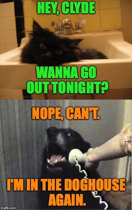 Story Of My Life (but it's sure fun getting there!!) | HEY, CLYDE I'M IN THE DOGHOUSE AGAIN. WANNA GO OUT TONIGHT? NOPE, CAN'T. | image tagged in kitty cat | made w/ Imgflip meme maker