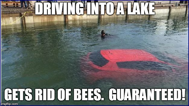DRIVING INTO A LAKE GETS RID OF BEES.  GUARANTEED! | made w/ Imgflip meme maker