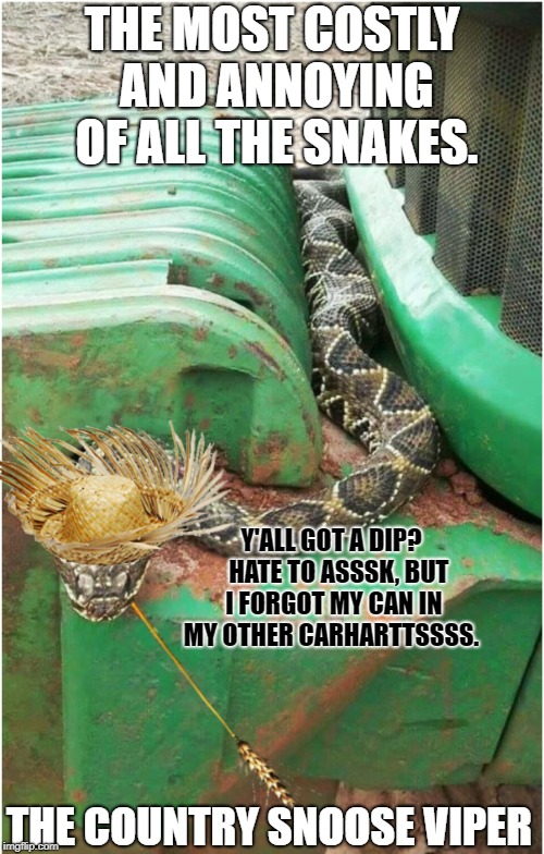 Snoose Viper | THE MOST COSTLY AND ANNOYING OF ALL THE SNAKES. THE COUNTRY SNOOSE VIPER Y'ALL GOT A DIP?   HATE TO ASSSK, BUT I FORGOT MY CAN IN MY OTHER C | image tagged in get your own can | made w/ Imgflip meme maker