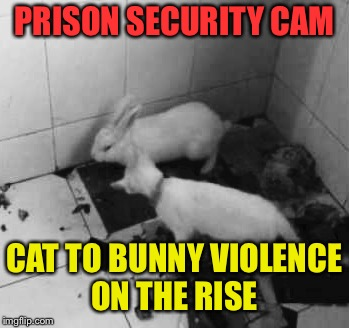 PRISON SECURITY CAM CAT TO BUNNY VIOLENCE ON THE RISE | made w/ Imgflip meme maker