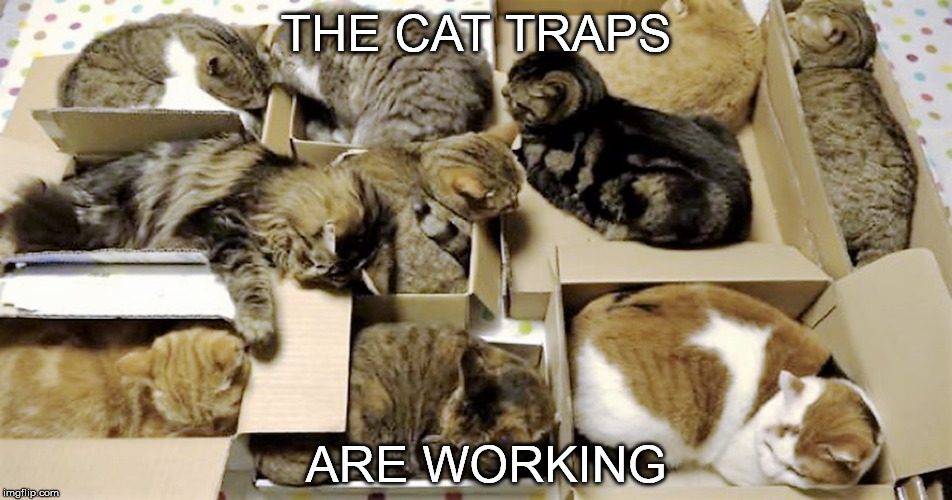 THE CAT TRAPS ARE WORKING | made w/ Imgflip meme maker