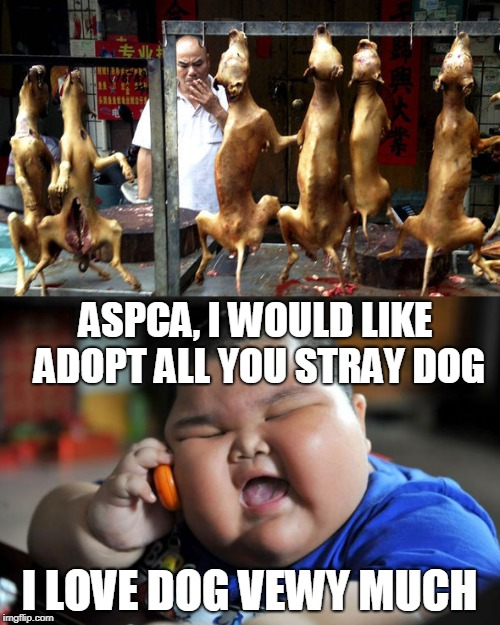 American Society for the Prevention of Cruelty to Animals | ASPCA, I WOULD LIKE ADOPT ALL YOU STRAY DOG I LOVE DOG VEWY MUCH | image tagged in animals,dogs,fat chinese kid,weird food,memes | made w/ Imgflip meme maker