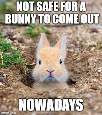 NOT SAFE FOR A BUNNY TO COME OUT NOWADAYS | made w/ Imgflip meme maker