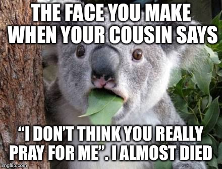 "Stunned Koala | THE FACE YOU MAKE WHEN YOUR COUSIN SAYS ""I DON'T THINK YOU REALLY PRAY FOR ME"". I ALMOST DIED 