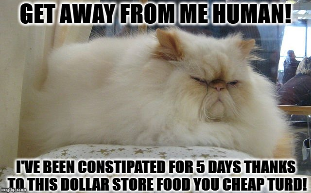 CONSTIPATION | GET AWAY FROM ME HUMAN! I'VE BEEN CONSTIPATED FOR 5 DAYS THANKS TO THIS DOLLAR STORE FOOD YOU CHEAP TURD! | image tagged in constipation | made w/ Imgflip meme maker
