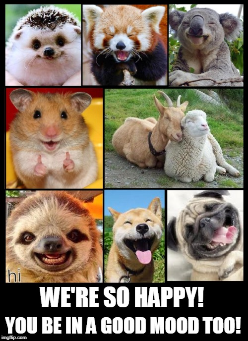 Happy Animals | WE'RE SO HAPPY! YOU BE IN A GOOD MOOD TOO! | image tagged in vince vance,animals laughing,hedgehog,friendly animals,smiling animals,animals | made w/ Imgflip meme maker