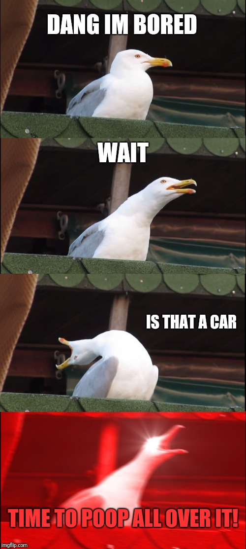 This is how birds think, right? | DANG IM BORED WAIT IS THAT A CAR TIME TO POOP ALL OVER IT! | image tagged in memes,inhaling seagull | made w/ Imgflip meme maker