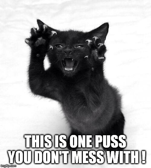 THIS IS ONE PUSS YOU DON'T MESS WITH ! | made w/ Imgflip meme maker