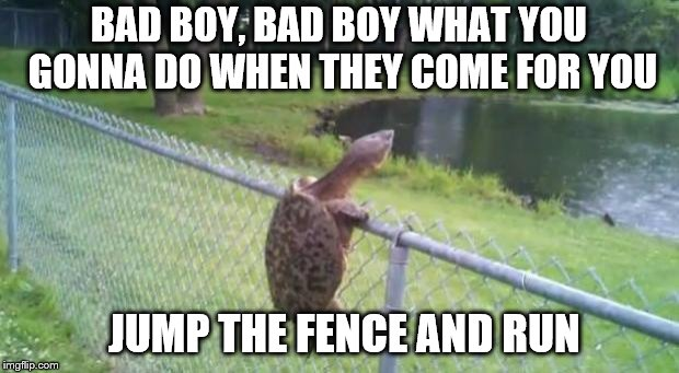 turtle fence escape | BAD BOY, BAD BOY WHAT YOU GONNA DO WHEN THEY COME FOR YOU JUMP THE FENCE AND RUN | image tagged in turtle fence escape | made w/ Imgflip meme maker