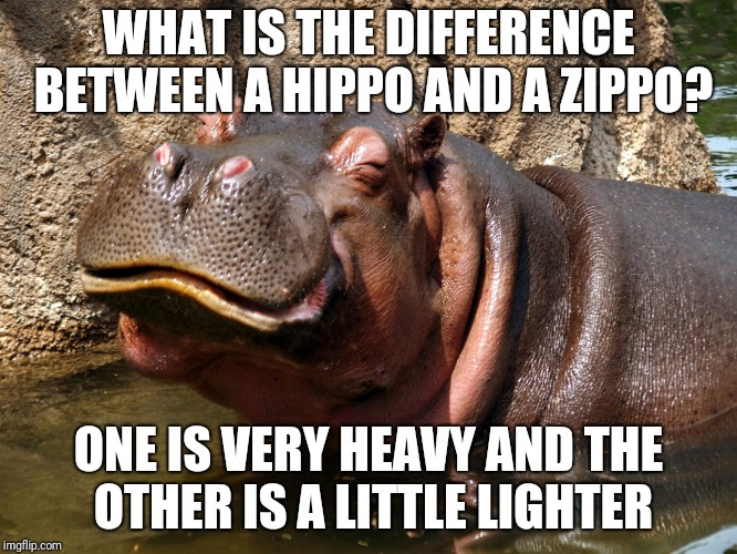 Hippo happy | WHAT IS THE DIFFERENCE BETWEEN A HIPPO AND A ZIPPO? ONE IS VERY HEAVY AND THE OTHER IS A LITTLE LIGHTER | image tagged in hippo happy | made w/ Imgflip meme maker
