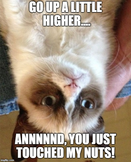 Grumpy Cat Meme | GO UP A LITTLE HIGHER.... ANNNNND, YOU JUST TOUCHED MY NUTS! | image tagged in memes,grumpy cat | made w/ Imgflip meme maker