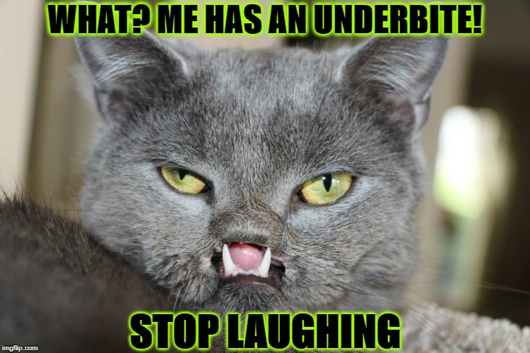 WHAT? ME HAS AN UNDERBITE! STOP LAUGHING | image tagged in don't laugh | made w/ Imgflip meme maker