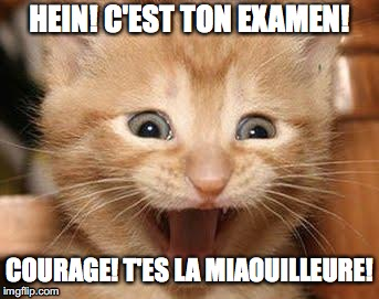 Excited Cat Meme | HEIN! C'EST TON EXAMEN! COURAGE! T'ES LA MIAOUILLEURE! | image tagged in memes,excited cat | made w/ Imgflip meme maker
