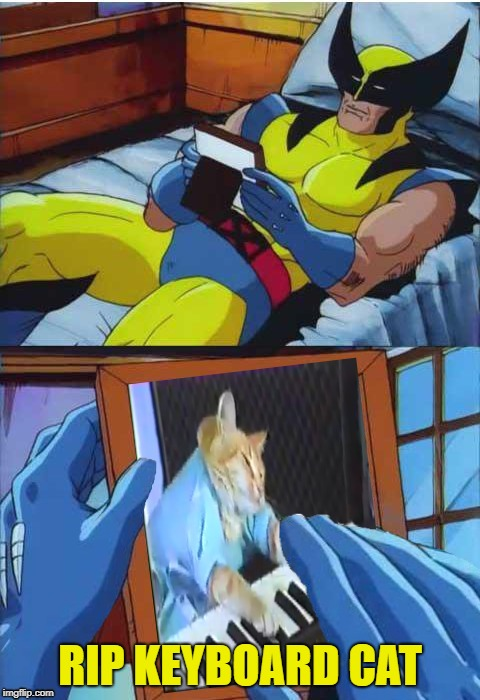 Wolverine Remembers | RIP KEYBOARD CAT | image tagged in funny memes,wolverine remeber,keyboard cat | made w/ Imgflip meme maker