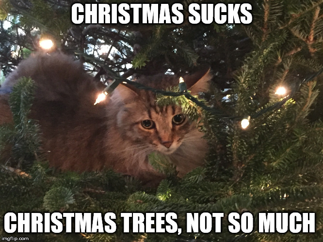Image tagged in funny cats,christmas cat,christmas tree
