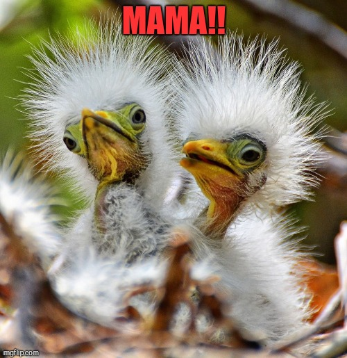MAMA!! | made w/ Imgflip meme maker
