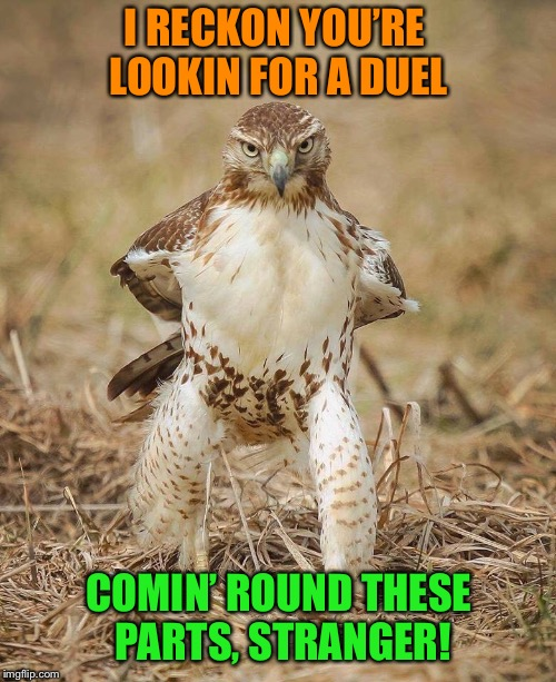 Cowboy Hawk | I RECKON YOU'RE LOOKIN FOR A DUEL COMIN' ROUND THESE PARTS, STRANGER! | image tagged in cowboy,hawk,funny animals,funny memes | made w/ Imgflip meme maker