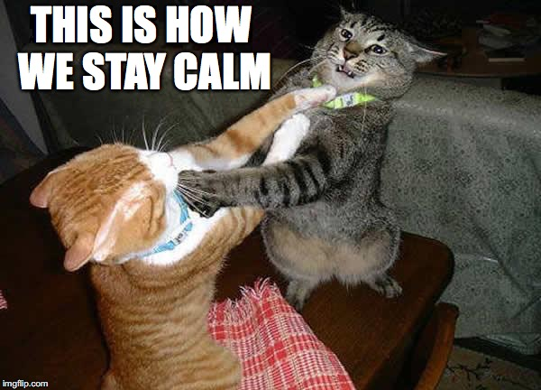 THIS IS HOW WE STAY CALM | made w/ Imgflip meme maker
