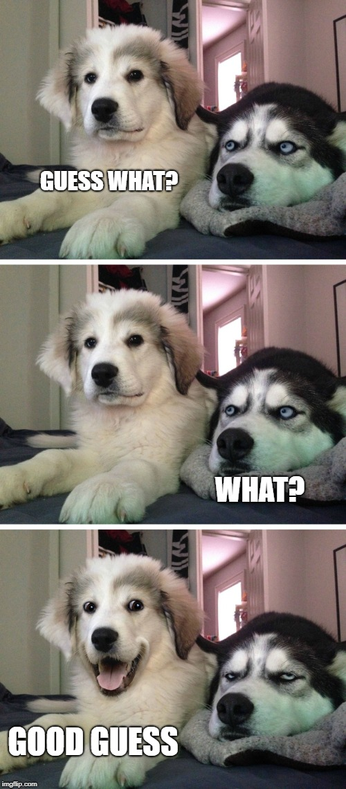 Bad pun dogs | GUESS WHAT? WHAT? GOOD GUESS | image tagged in bad pun dogs | made w/ Imgflip meme maker