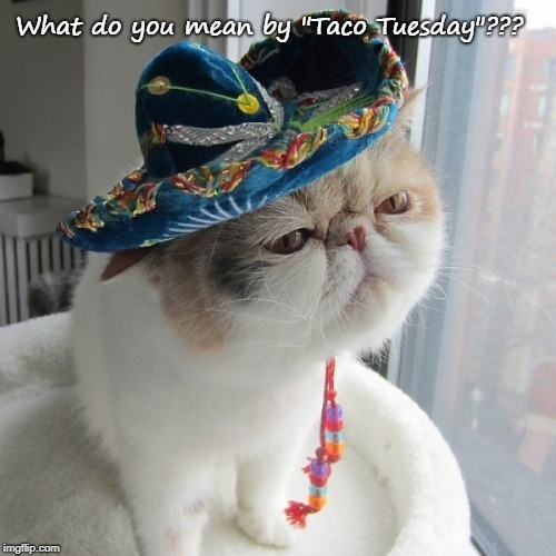 "Confused Kitty... | What do you mean by ""Taco Tuesday""??? 