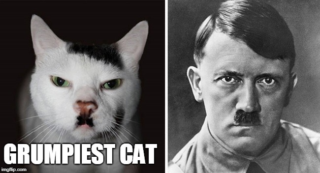 GRUMPIEST CAT | image tagged in grumpiest cat,hitler,asshole | made w/ Imgflip meme maker