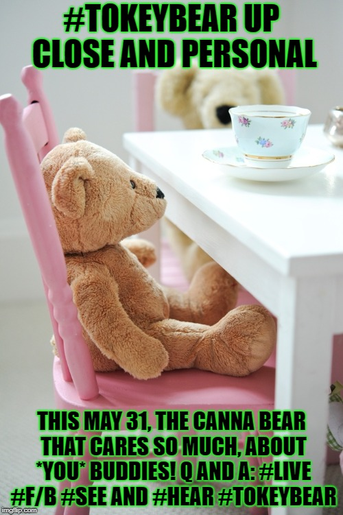 #TOKEYBEAR UP CLOSE AND PERSONAL THIS MAY 31, THE CANNA BEAR THAT CARES SO MUCH, ABOUT *YOU* BUDDIES! Q AND A: #LIVE #F/B #SEE AND #HEAR #TO | image tagged in tokey bear the canna bear that cares so much,about you | made w/ Imgflip meme maker