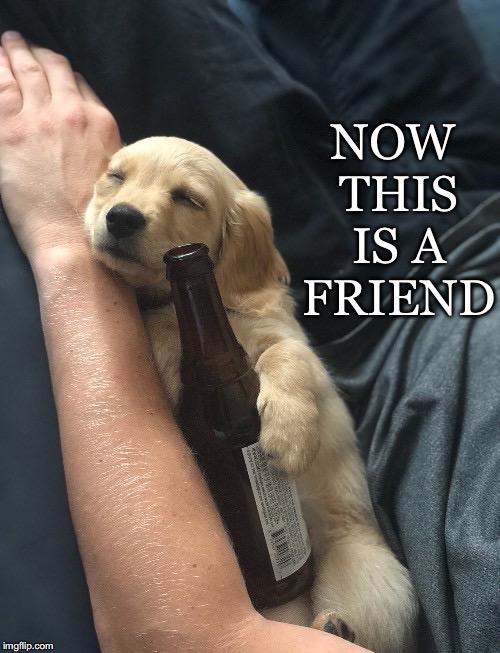 A Friend | image tagged in puppy,man's best friend,dog,bottle,beer,hugging | made w/ Imgflip meme maker