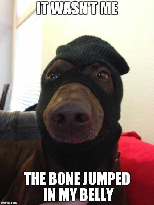 dog robber | IT WASN'T ME THE BONE JUMPED IN MY BELLY | image tagged in dog robber | made w/ Imgflip meme maker