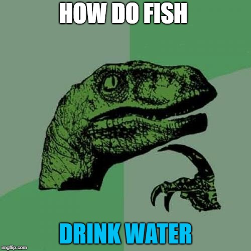 Philosoraptor Meme | HOW DO FISH DRINK WATER | image tagged in memes,philosoraptor | made w/ Imgflip meme maker
