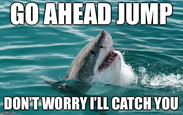 Friendly Shark | GO AHEAD JUMP DON'T WORRY I'LL CATCH YOU | image tagged in friendly shark,memes,funny,cute animals | made w/ Imgflip meme maker