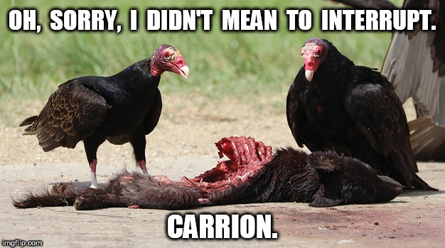 Carrion | OH,  SORRY,  I  DIDN'T  MEAN  TO  INTERRUPT. CARRION. | image tagged in carrion,vulture,vultures | made w/ Imgflip meme maker
