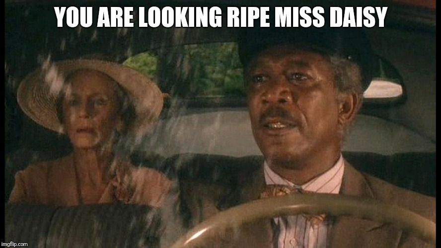 Driving Miss Daisy | YOU ARE LOOKING RIPE MISS DAISY | image tagged in memes,morgan freeman | made w/ Imgflip meme maker