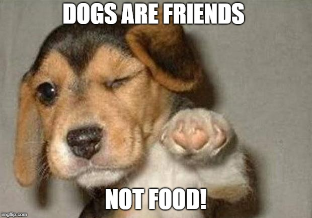 Winking Dog | DOGS ARE FRIENDS NOT FOOD! | image tagged in winking dog | made w/ Imgflip meme maker